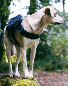 Bravery Dog Pack & Collar