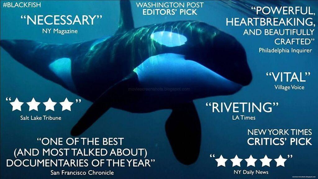 outdoor documentary Blackfish